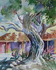 Banyan Tree, painting by Bob Caffrey