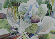Cabbage, painting by Bob Caffrey
